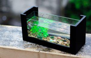 Die Welt in einem Aquarium