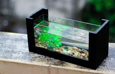 Die Welt in einem Aquarium. Mehr Infos auf dieser Ratgeberseiite