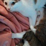 Werde Gastautor im Katzenparadies