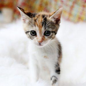 Haustiere Backlinks kaufen auf katzenparadies24.de